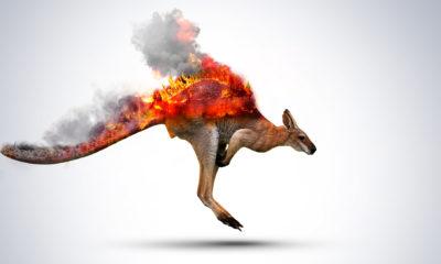 Australie Incendie Kangourou