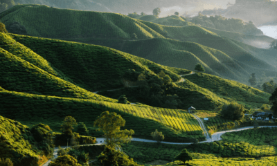 « Les podtrips de Saliha » partent en Malaisie avec Asian Trails