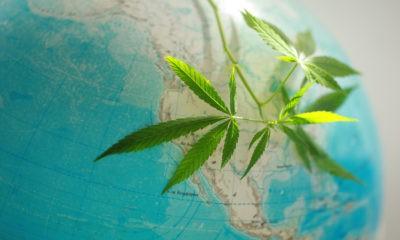 La légalisation du cannabis dans le monde