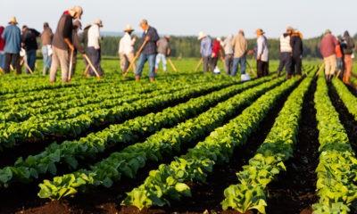 Un été incertain pour les saisonniers européens ?
