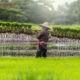 Job en Asean: Laos