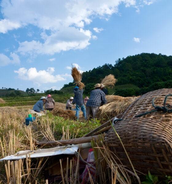 Job en Asean : Thaïlande